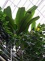 Teplice, skleník Tropicana, tropický skleník (02).jpg