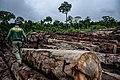 Terra Indígena Pirititi, Roraima (40652073400).jpg