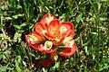 TexasIndianPaintbrush-0805.jpg