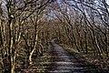 Texel - De Dennen - Nature Path 'Alloo' - View SE.jpg
