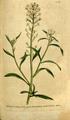 The Botanical Magazine, Plate 101 (Volume 3, 1790).png