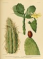 The Cactaceae (Plate XXXIII) (6026511530).jpg