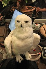 The Making of Harry Potter 29-05-2012 (Hedwig).jpg