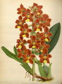 The Orchid Album-01-0083-0027.png