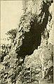 The Pine-tree coast (1891) (14756475446).jpg