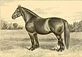 The breeds of live stock, and the principles of heredity (1887) (14758162916).jpg