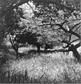 The garden (3070184241).jpg
