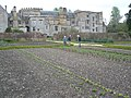 The kitchen garden, in early May, Forde Abbey - geograph.org.uk - 1286484.jpg