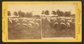 The shepherd's flock, soldiers' home, Dayton, Ohio, from Robert N. Dennis collection of stereoscopic views.png
