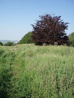 Stantonbury Camp - The top of Stantonbury Hill