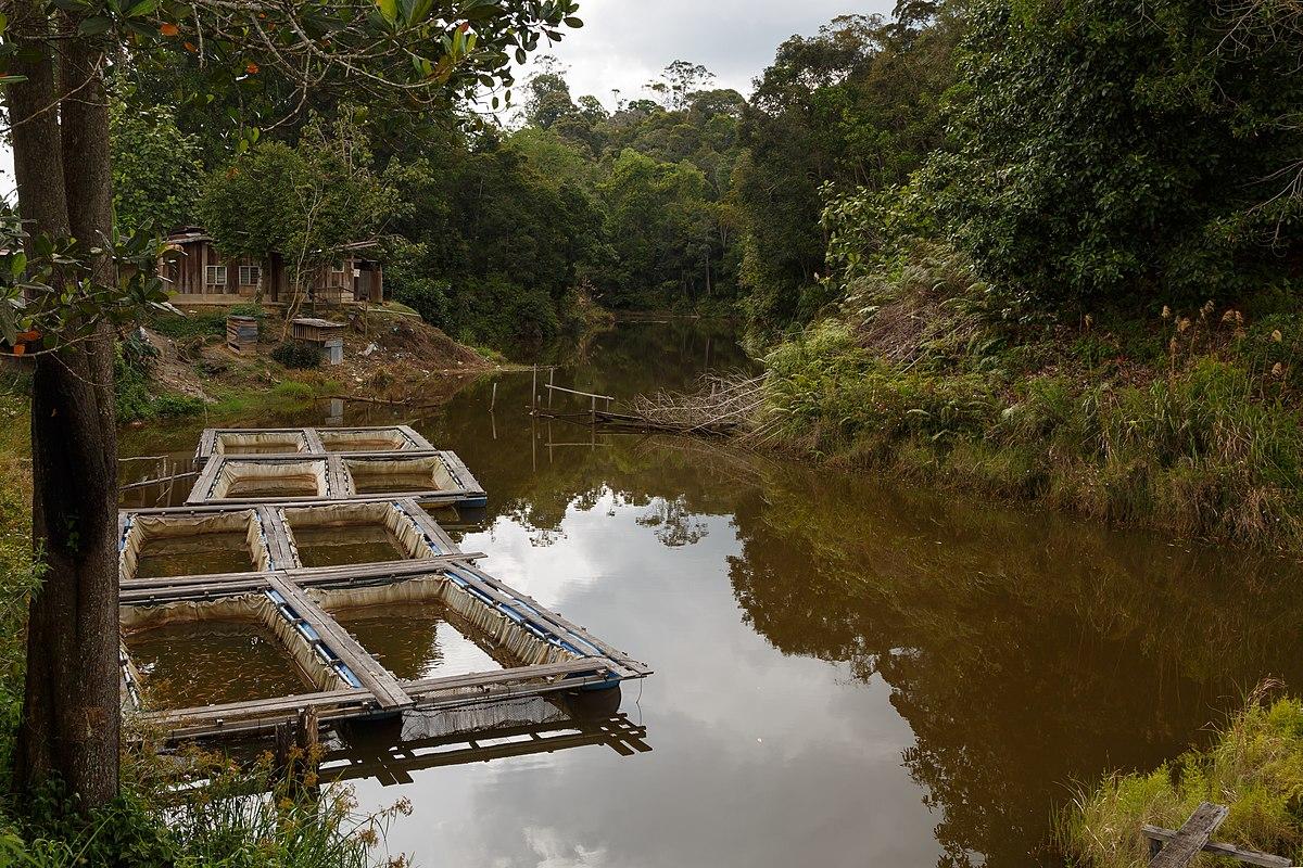 Urban aquaculture - Wikipedia