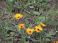 Tienie Versfeld Wildflower Reserve-P9210017.jpg