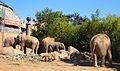 Tierpark Hellabrun - elephants.jpg