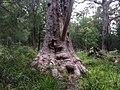 Tingle forest.jpg