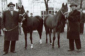 Toivo Pohjala - Toivo Pohjala (left) and harness racing driver Tuomo Mäkelä with two Orlov mares