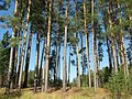 Tomsky District, Tomsk Oblast, Russia - panoramio (197).jpg