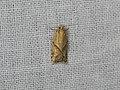 Tortricinae sp. (41592822804).jpg