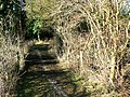 Track, Siccaridge Wood, near Frampton Mansell - geograph.org.uk - 1133765.jpg