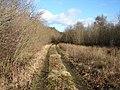 Track through Eleanor Wood - geograph.org.uk - 1123731.jpg
