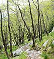 Trail Planina Goričica - Bovec 3.jpg