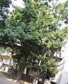 Tree ILAVU.jpg