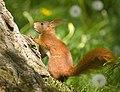 Tree inspector (41069713755).jpg