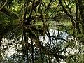 Trees in edge of Fernworthy Reservoir - geograph.org.uk - 897924.jpg