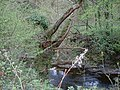 Trout Pools on the Vyrnwy - geograph.org.uk - 166548.jpg