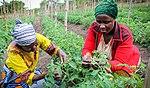 Tuamini farmers, Tanzania (39727889271).jpg