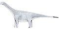 Turiasaurus1.jpg