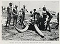 Tusks of Last Elephant Killed by Sir W. Garstin (1906) - TIMEA.jpg