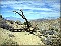 Two Peak View, Joshua Tree NP 4-13-13 (8657193153).jpg
