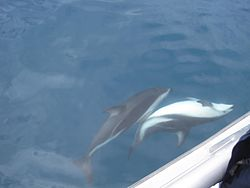 Dolphin Watching Tours Myrtle Beach Sc