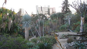 Mildred E. Mathias Botanical Garden - Image: UCLA BOT GARD 2009 023