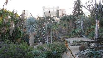 Mildred E. Mathias Botanical Garden - Image: UCLA BOT GARD 2009 023