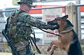 US Navy 040226-N-4142G-042 U.S. Marine Corps Sgt. John Bell and his canine partner.jpg