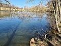 Umgefallener Baum Pfaffenteich Hof 20200405 122236.jpg