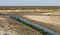 Uniek door eb en vloed steeds wisselend kweldergebied. Locatie, Noarderleech Provincie Friesland 47.jpg