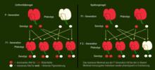 Flexibilitätsmanagement: Ein systemdynamischer Ansatz zur quantitativen