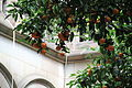 University of Barcelona oranges.jpg