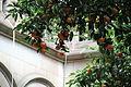 University of Barcelona oranges.jpg
