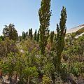 Valle de Jere-CTJ-IMG 5664.jpg