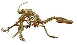 Velociraptor Wyoming Dinosaur Center White Background.jpg