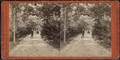 View in Hoey's Park, from Robert N. Dennis collection of stereoscopic views.png