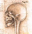 View of a Skull III.jpg
