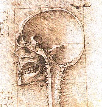 Head - Image: View of a Skull III