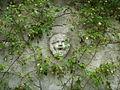 Villa la pietra, pomario, muro di cinta, testina 02.JPG