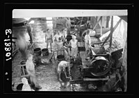 Vintage activities at Richon-le-Zion, Aug. 1939. Grapes going into the hopper for crushing LOC matpc.19778.jpg