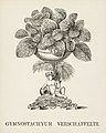 Vintage illustrations by Benjamin Fawcett for Shirley Hibberd digitally enhanced by rawpixel 105.jpg