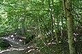 Vintgar Gorge (36294106004).jpg